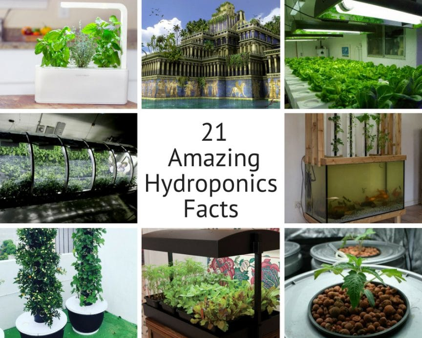21 amazing hydroponics facts