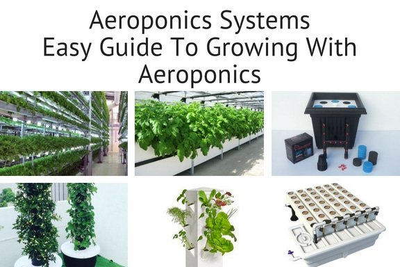 guide to home aeroponics systems for growing plants