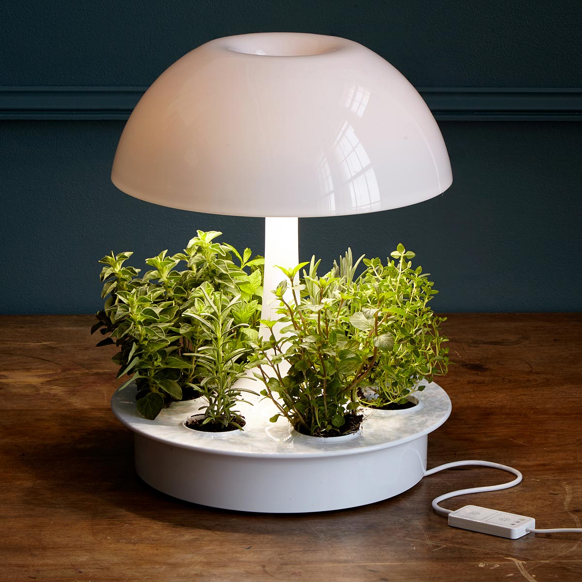 Picture of: Can You Grow Plants Without Sunlight Smart Garden Guide