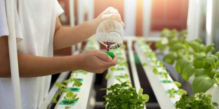 Hydroponic Nutrient Solution (Easy Guide) - Smart Garden Guide