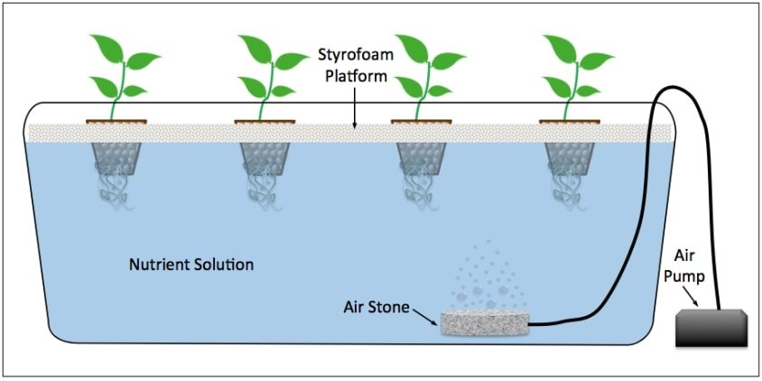 deep water culture hydroponics system