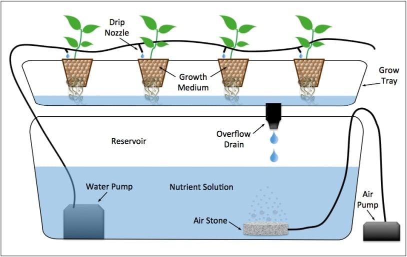 drip system hydroponics