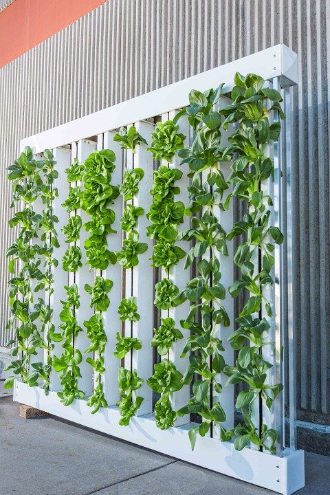 vertical farm hydroponics
