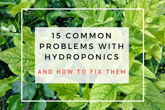 15 common problems with hydroponics