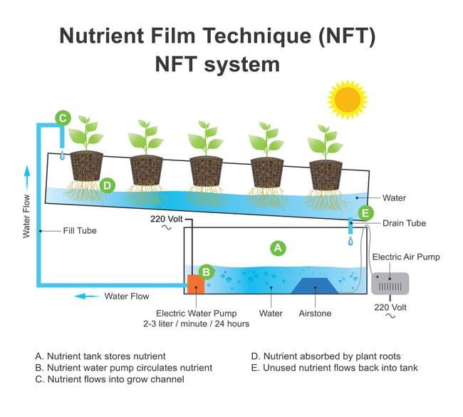 what is nft hydroponics nutrient film technique hydroponics diagram