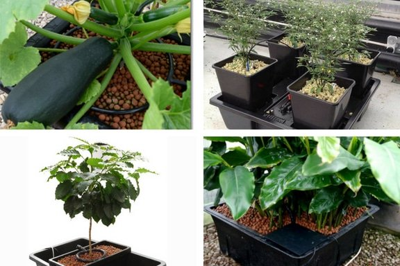what is drip system hydroponics