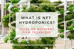 what is NFT hydroponics guide to nutrient film technique