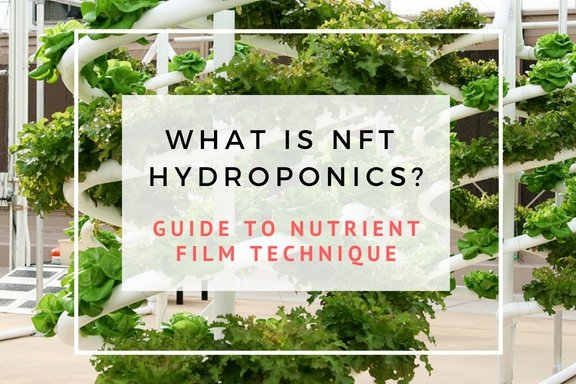 What Is NFT Hydroponics? Guide To Nutrient Film Technique