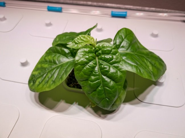 getting started in hydroponics