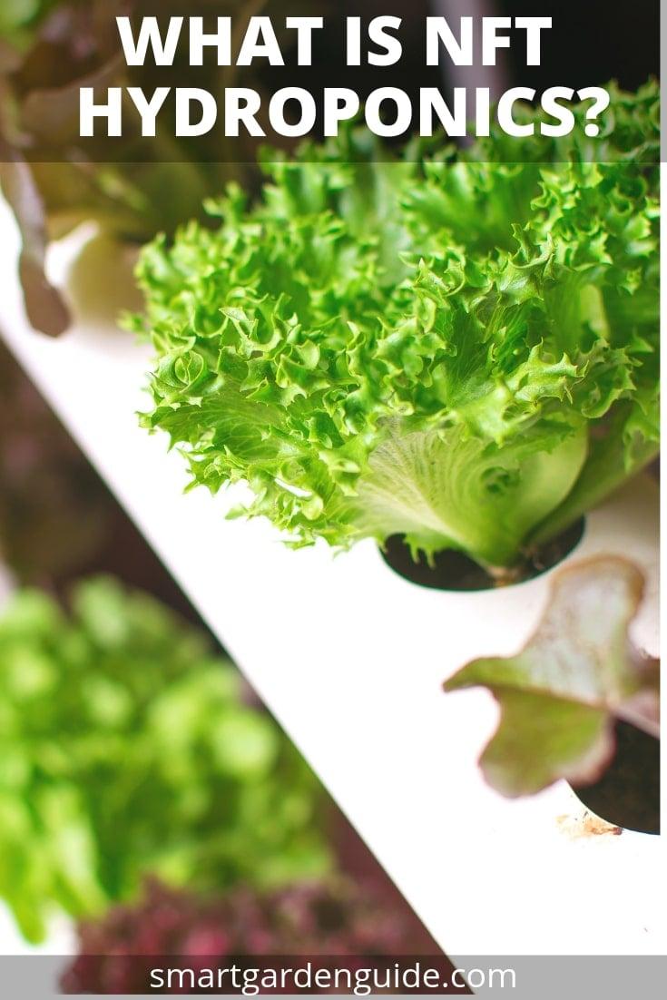what is nft hydroponics nutrient film technique