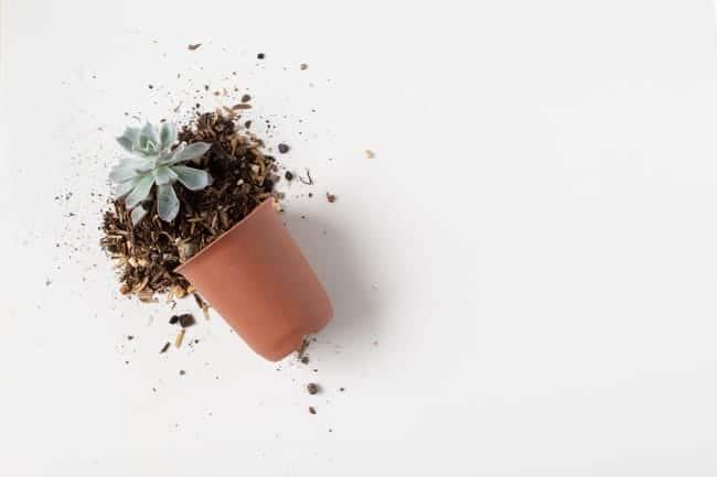 best soil for indoor succulents