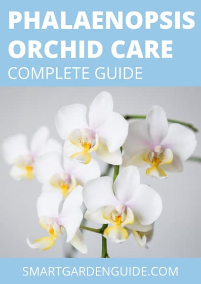complete guide to phalaenopsis orchid care