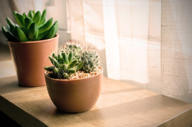 light requirements for succulent houseplants