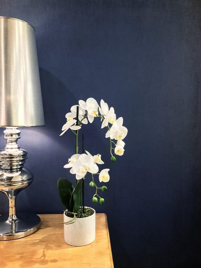 where to place a phalaenopsis orchid at home