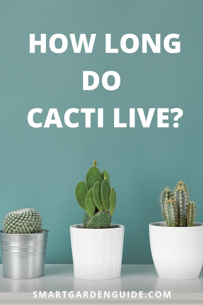 how long do cacti live