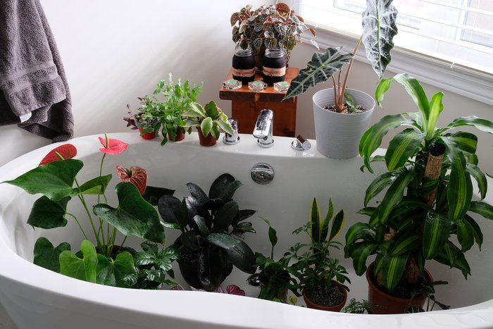 how to water indoor plants without making a mess