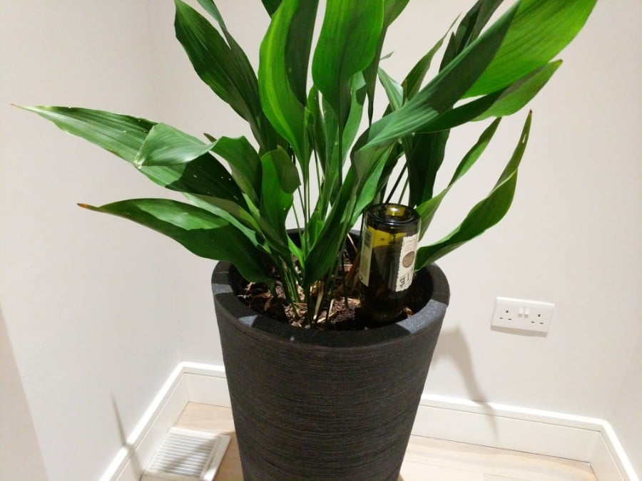 How To Water Indoor Plants While On Vacation - Smart Garden Guide