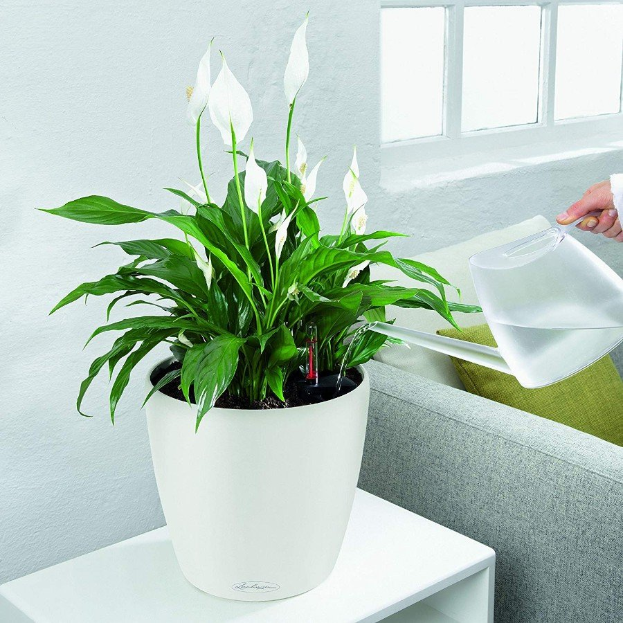 How To Water Indoor Plants While On Vacation   Smart Garden Guide