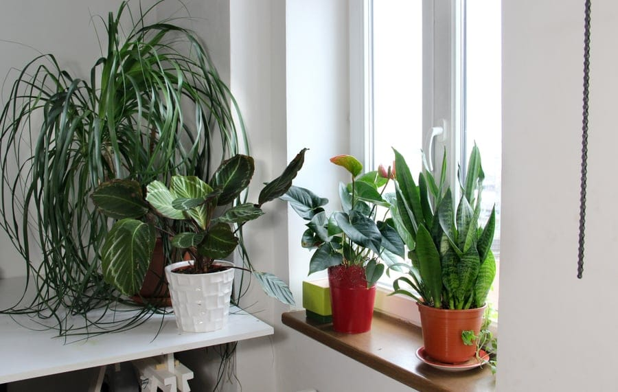 Water Indoor Plants While On Vacation, How To Care For Houseplants While On Vacation