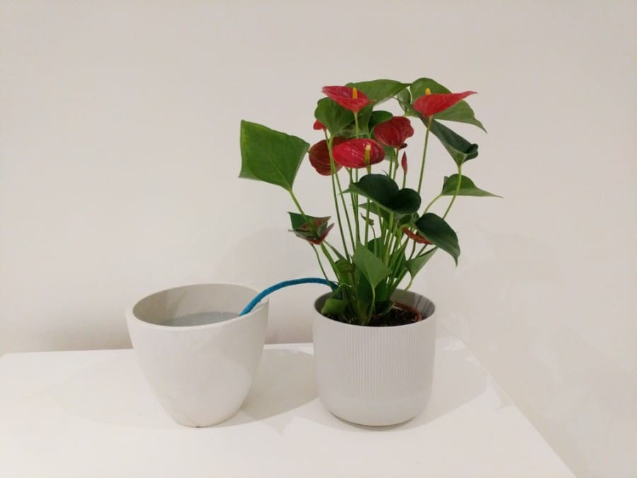 how to water indoor plants while on vacation