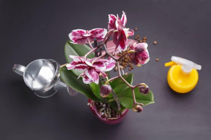 Should You Mist Orchids? Do This Instead! - Smart Garden Guide