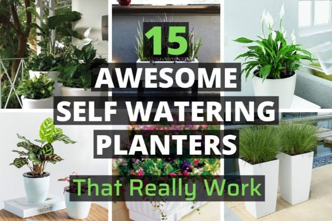 15 Awesome Indoor Self Watering Planters That Really Work