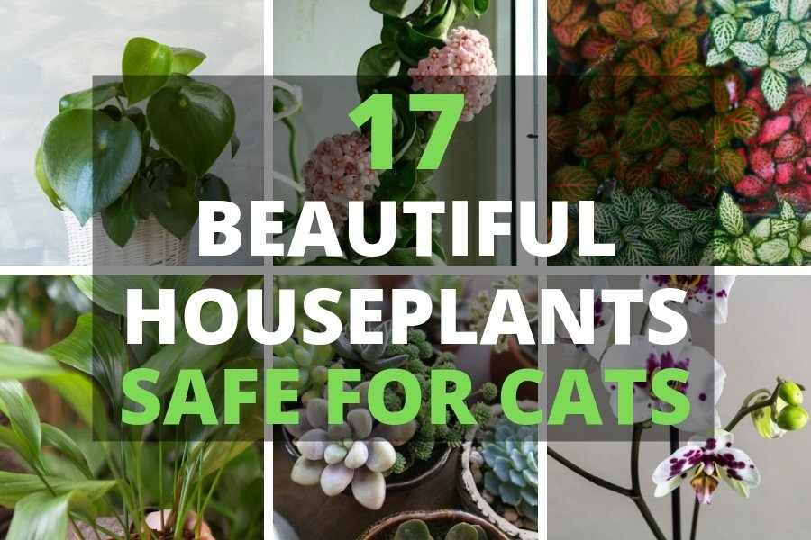 17 Beautiful Houseplants Safe For Cats With Pictures Smart Garden Guide