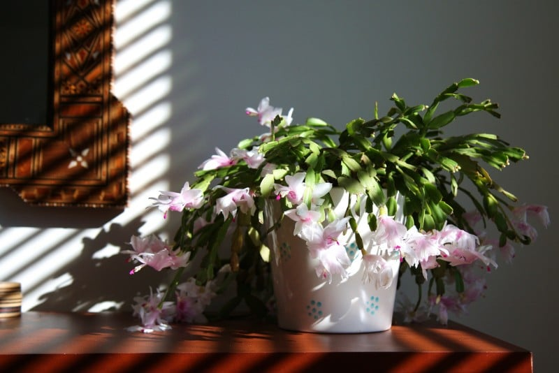 17 beautiful houseplants safe for cats