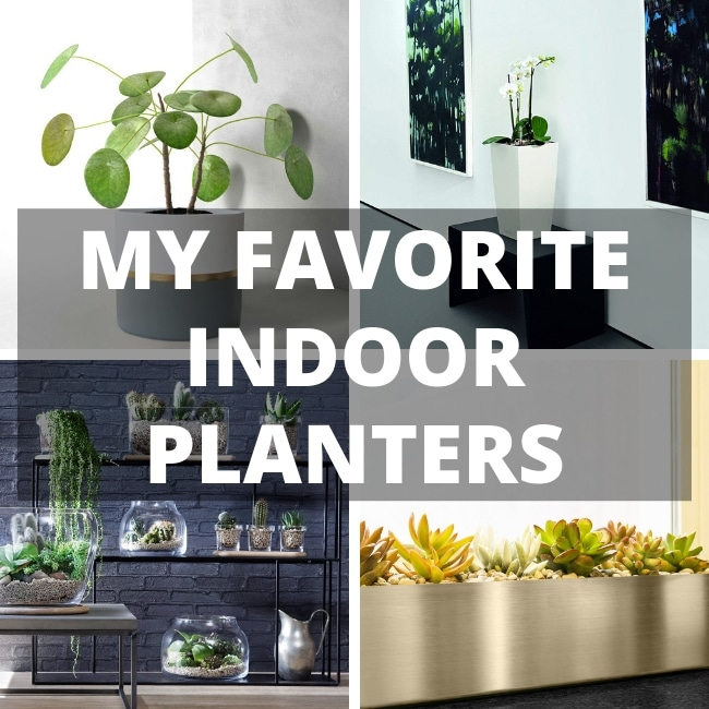 my favorite indoor planters