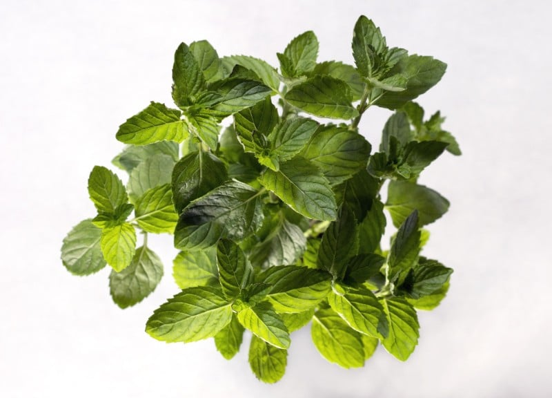 best smelling indoor plants mint