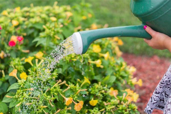 Smart Garden Guide