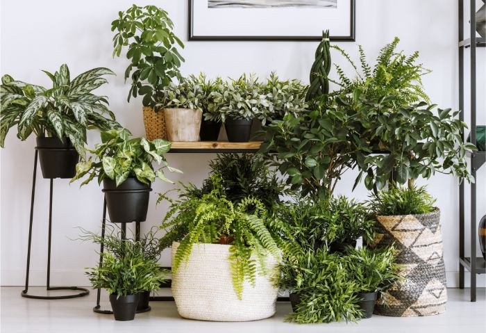 increase humidity for indoor plants