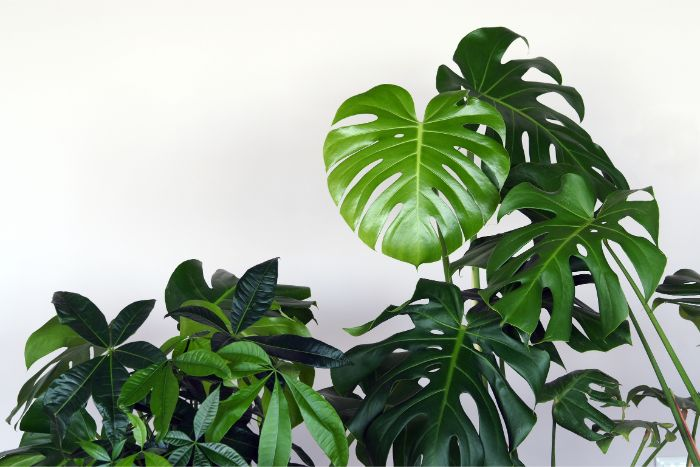 increase humidity for indoor plants by grouping them