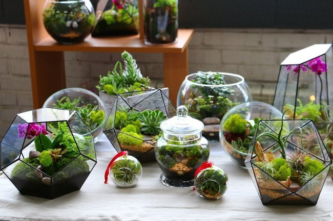 increase humidity for indoor plants with a terrarium