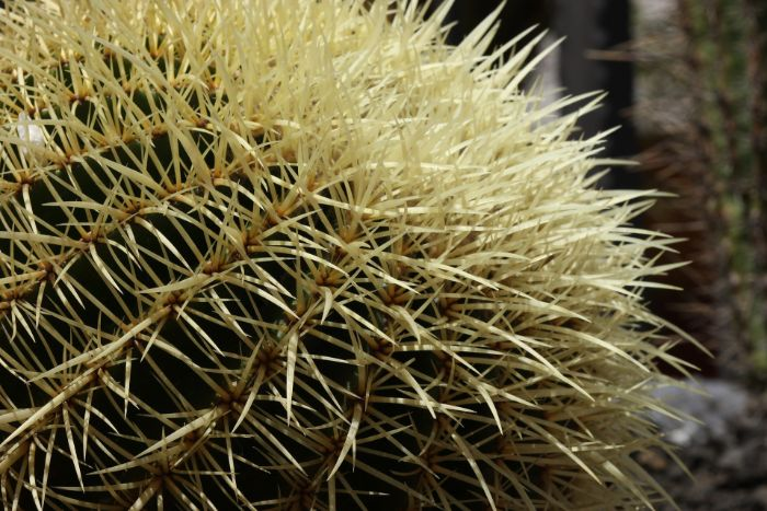 why do cacti have spines