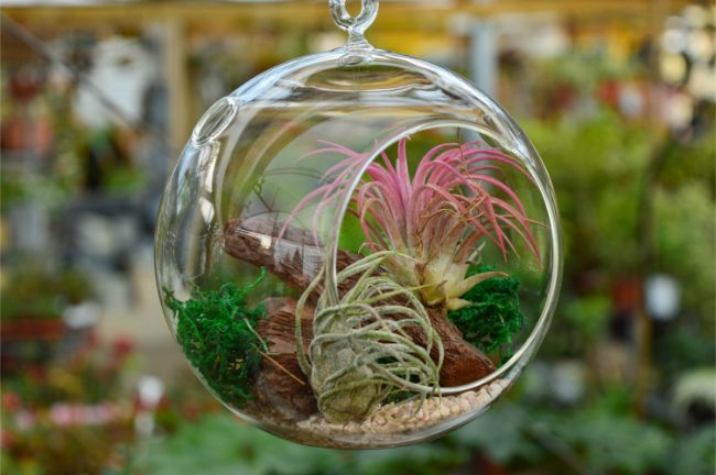 air plant tillandsia best houseplants for beginners
