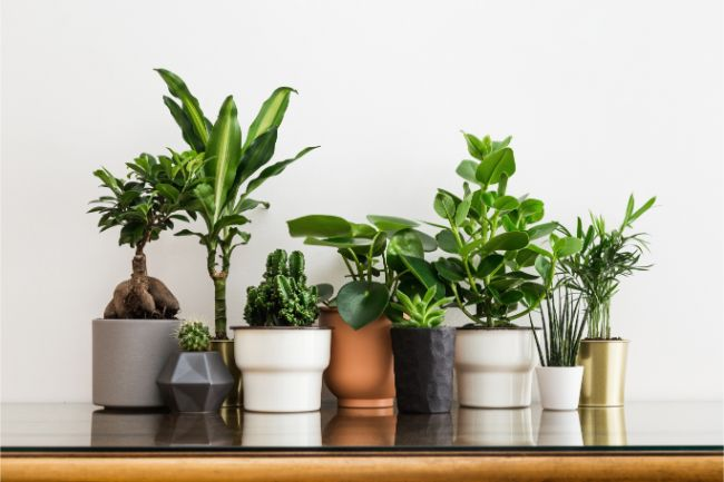 best houseplants for beginners