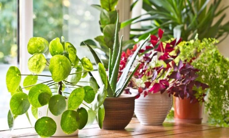 choose your perfect houseplant