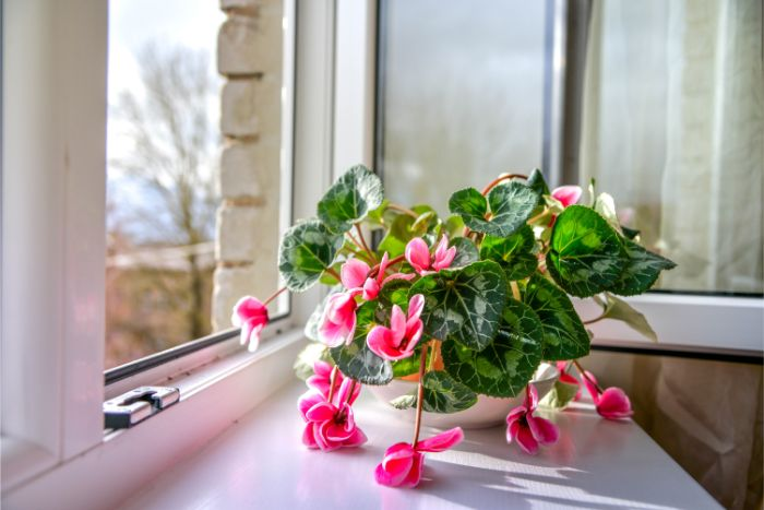 how to tell when a houseplant needs water