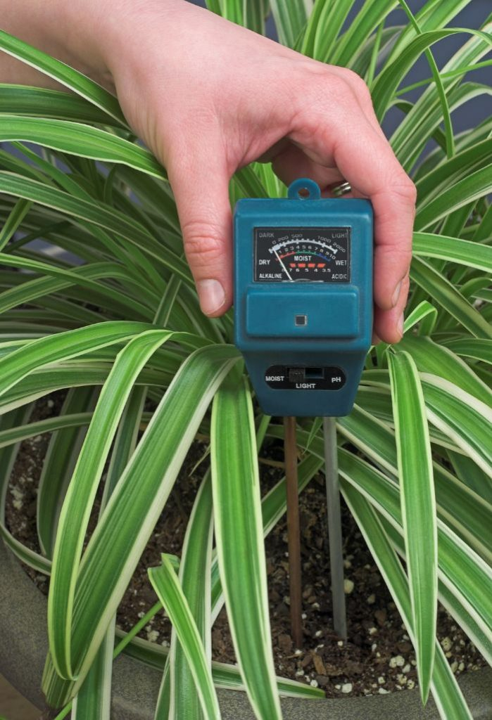 how to tell when a houseplant needs water moisture meter