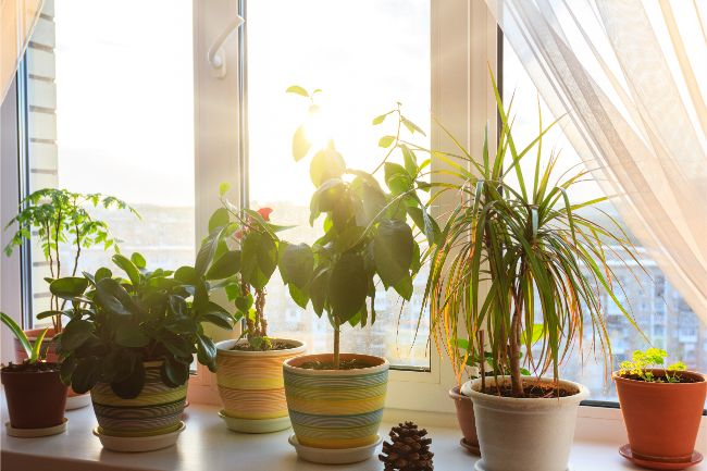 use direct sunlight to get rid of mold in houseplant soil