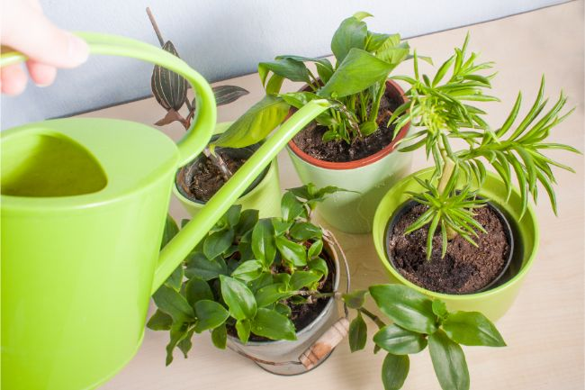 adjust watering schedule to get rid of mold in houseplant soil