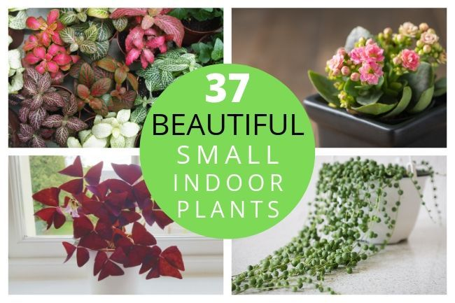 37 Small Indoor Plants To Bring Beauty Into Your Home - Smart Garden