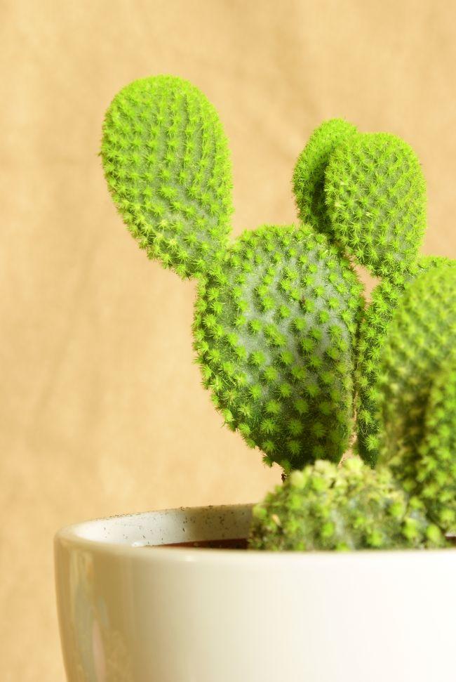 cactus adaptations
