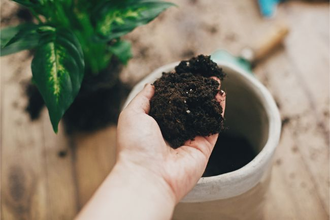 how to aerate soil in potted plants