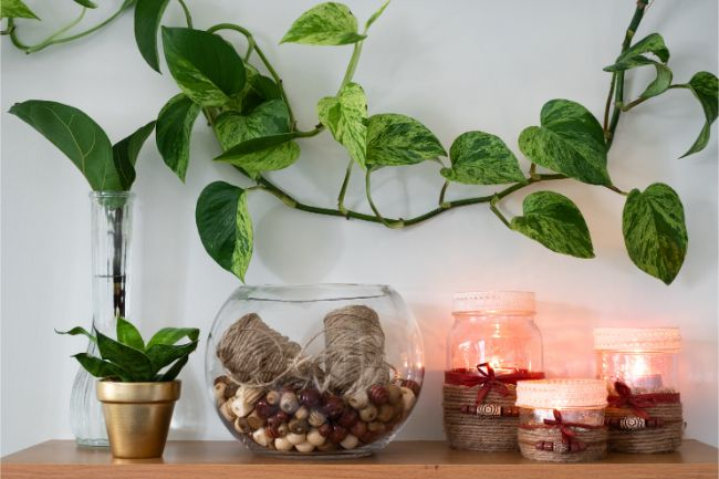 Are Pothos Poisonous? (And How To Grow Them Safely) - Smart ... on poison ivy plants, plant ivy plants, perennial ivy plants, small ivy plants,