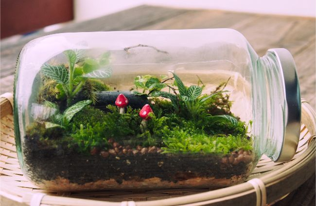 best closed terrarium plants