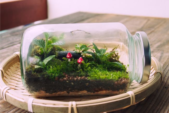 moss in a closed terrarium