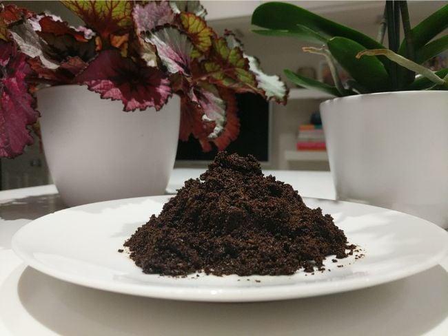 coffee grounds to fertilize indoor plants