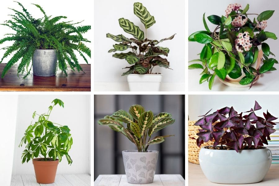 14 Perfect East Facing Window Plants Care Tips Pictures Smart Garden Guide